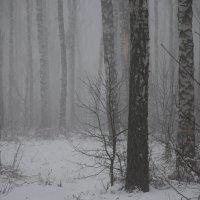 Зимняя полянка :: Кирилл Миляев