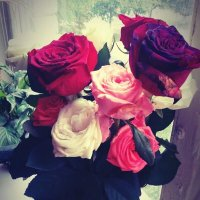 розы :: Таня Новик