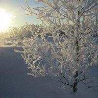 скачет солнце по полям :: liudmila drake