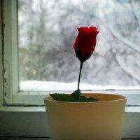 my rose :: Christina Z.