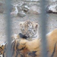 """Зоопарк """"Роев ручей"""" :: Света Горохова"""