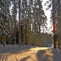 Мороз и солнце..... :: Юрий Цыплятников