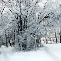 зима пришла :: Виктор