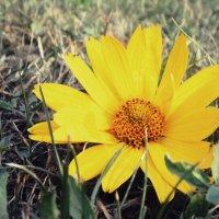 Цветок :: Анастасия Манкерова