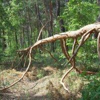 Динозавр в движении :: Надежда Сорокина