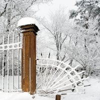 Решетка зимнего сада :: Александр Капустин
