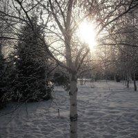 Зима. Парк возле школы. :: Галина Суконко