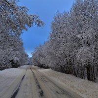 Дорога в зимнем лесу... :: Олег .
