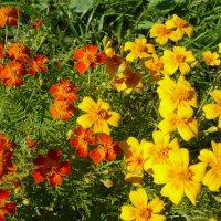 немного цветов :: Михаил Б