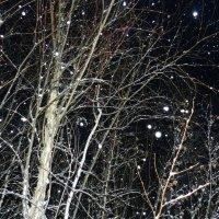 Снежный звездопад :: Ирина Гангало