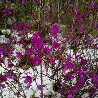 Весна :: Ирина Гангало