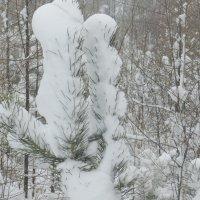 Белый и пушистый..... :: Ирина Гангало