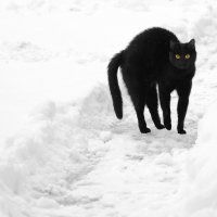 Черная кошка на тропинке :: Андрей Лошаков