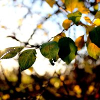 Осень :: Мария Vlasova