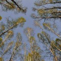 Когда деревья были большими :: Владимир Смирнов