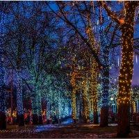 Чудный лес... :: Аркадий Фиксаж