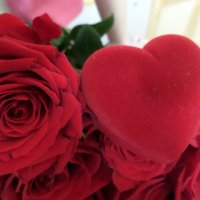 Розы...... :: Soloveika ***