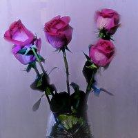 розы на день рождения :: Татьяна Чернова