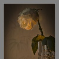 увядающая роза :: ник. петрович земцов