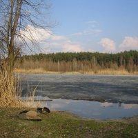 Пора купаться! :: Алина Тазова