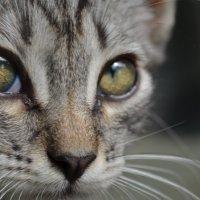 Кошка :: Максим Войцещук