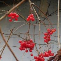 ягоды :: Эмилия Поленова