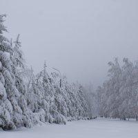 Грустный зимний день :: glubina 108