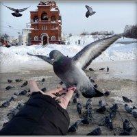 Доверие! :: Владимир Шошин