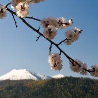 Весна в Хакасии :: Ирина Якунина