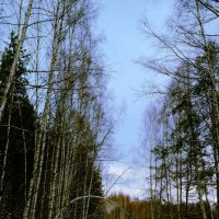 Зимняя дорога :: Artem Andreev