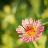 цветок :: Lis Sma