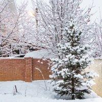 И снова выпал снег! :: Василий Игумнов