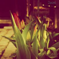 Тюльпаны :: Марина Дубчак