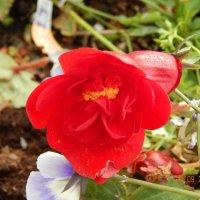 Цветок :: Katherine Mozgo