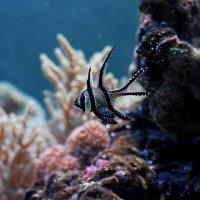 Рыба :: Евгения Осипова