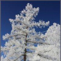 В зимнем наряде. :: Наталья Юрова