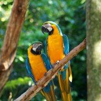 Яркие птички :: Светлана Белова
