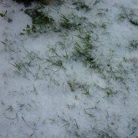 неожиданный снег) :: Oxi --