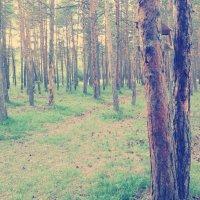 в лесу :: Сардаана Гоголева