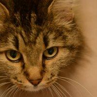 Кошка :: Екатерина Марфута