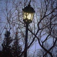 Одинокий фонарь :: Максим \\\