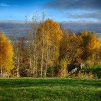 Золото осени :: Валерий Шибаев