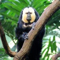США. Вашингтон. Смитсоновский Национальный зоопарк. :: Виктория