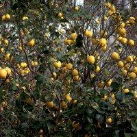 Съешь лимон, чтобы не подумали, что тебе очень хорошо :)) :: ФотоЛюбка *