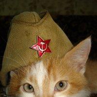 красноармеец :: Андрей Герасимов