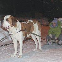 Мы катаемся на собаке :: Ирина Подлузская