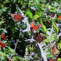 Бабочки :: Наталья Рубан