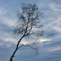Одинокая...и на семи ветрах... :: Наталья Юрова