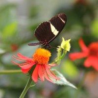 США. Роквилл. Ботанический сад. Питомник бабочек. :: Виктория