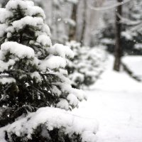 снег :: Aizek Kaniyazoff